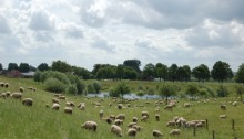 Rijndijk bij Millingen a/d Rijn