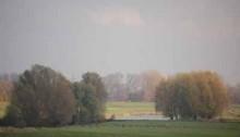 Rijngebied bij Rees