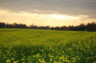 Landschap bij Werth