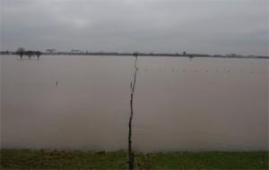 Rijn bij Emmerich